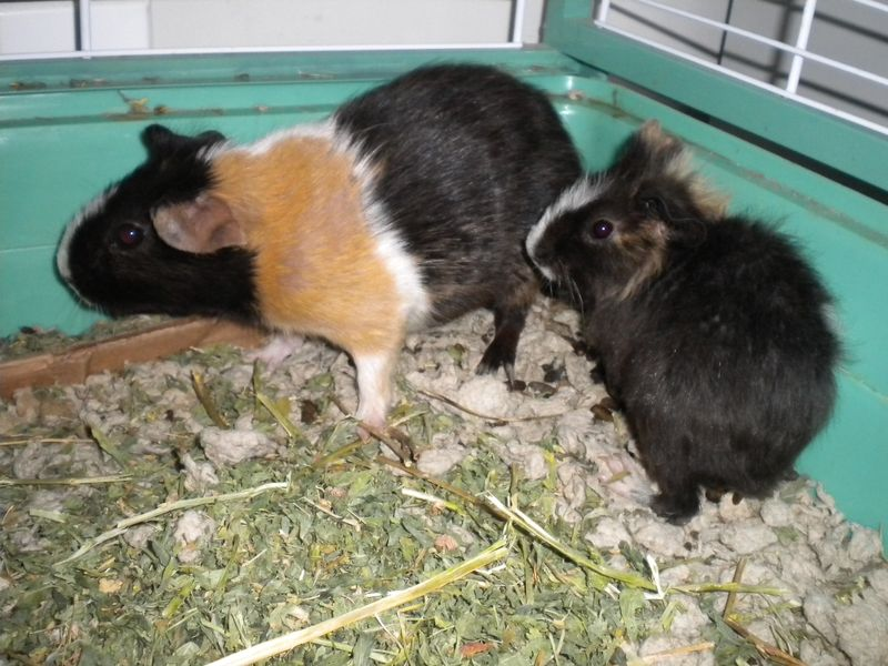Pig Pictures 005