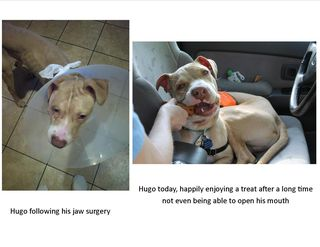 Hugo before and after