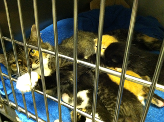 Kittens NYA2