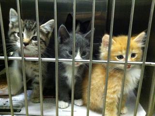 Kittens NYA