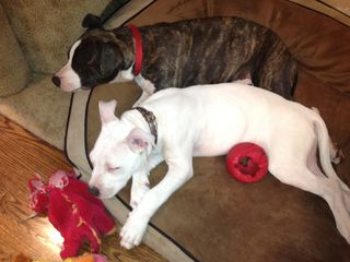 Maestro with Foster Buddy Stella