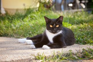 Free-roaming cats that have already been spayed or neutered are identified by the universal left ear-tip.