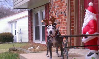 Santas lost reindeer 2012 (1)