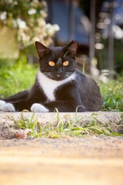 CatNiPP Cats (1)