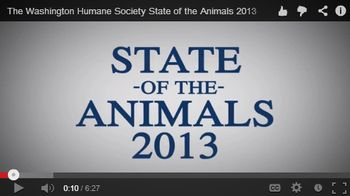 State of the Animals Video Thumbnail