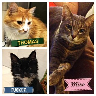 Thomas, Tucker, Miso