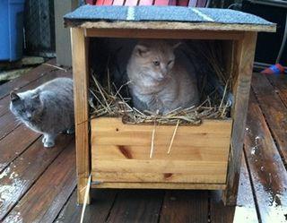 Cat_shelter_2